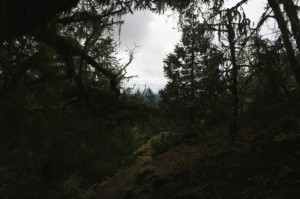 800px-Oregon2013-058