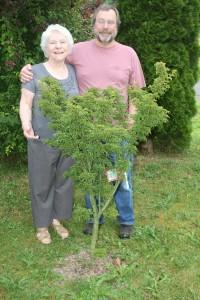 Moms Visit 2012 tree