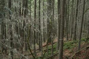 Oregon2013-062